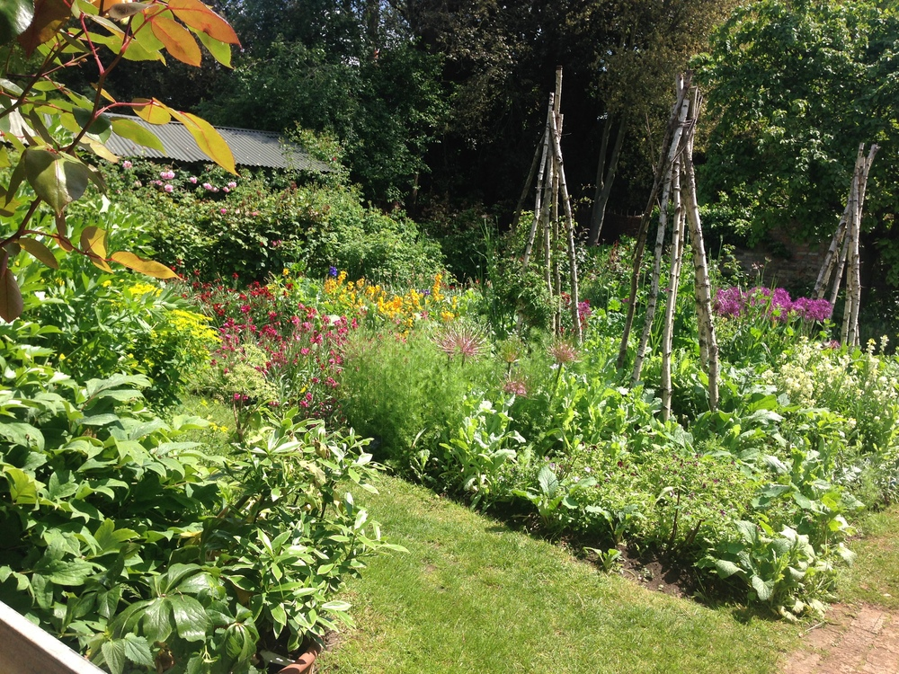 Petersham's vegetable garden