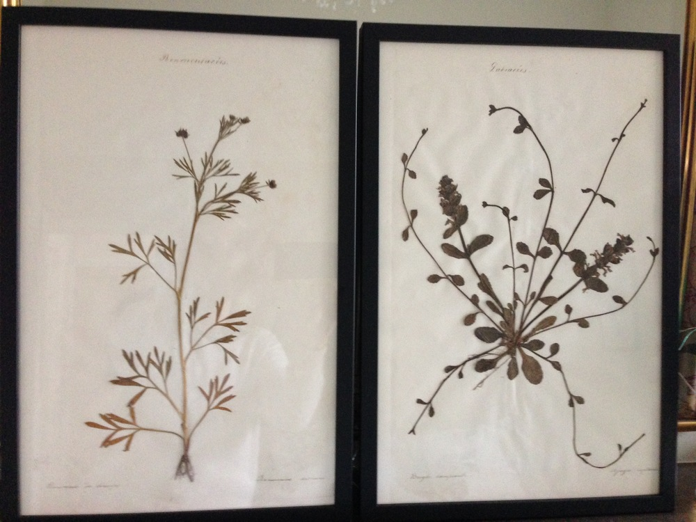 The two 19th century pressed plants prints that I purchased. I'm going back on Friday to buy two more as I plan to hang two either side of the bed in the guest room