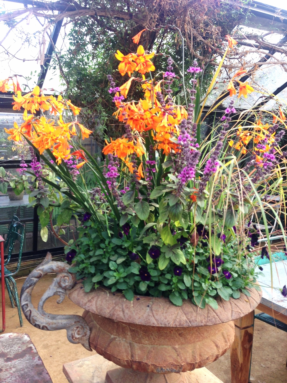 An urn of my favourite combination of colours - purple and orange - which sits in the glasshouse where you can sit and eat