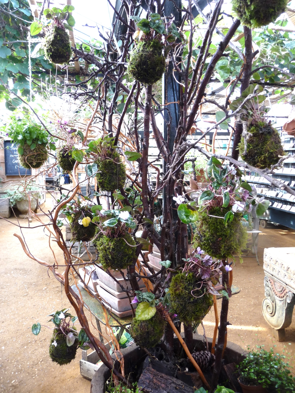Clever display of plants which are wrapped in Sphagnum moss and chicken wire or twine to hold the soil and moss in place.