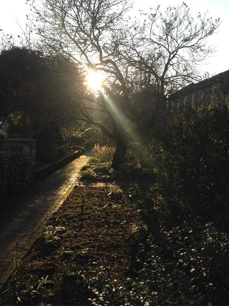 Dusk in the garden