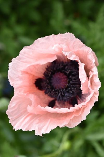 m_Flowers (2).jpg