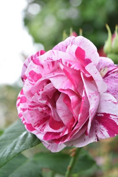 m_Flowers (4).jpg