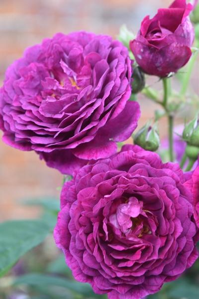 m_Flowers (6).jpg