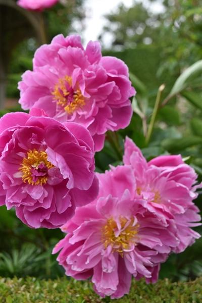 m_Flowers (8).jpg