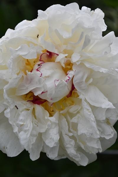 m_Flowers (11).jpg