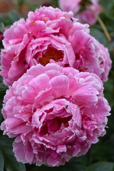 m_Flowers (12).jpg