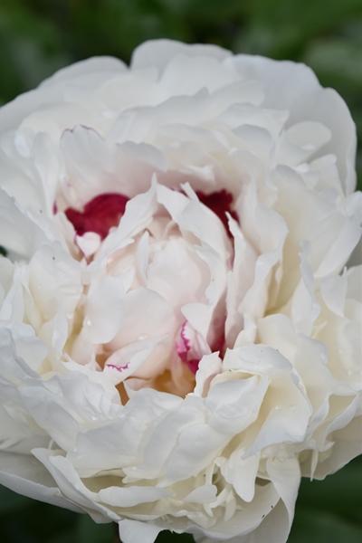 m_Flowers (18).jpg