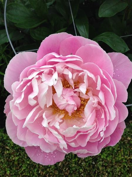 m_Flowers (21).jpg