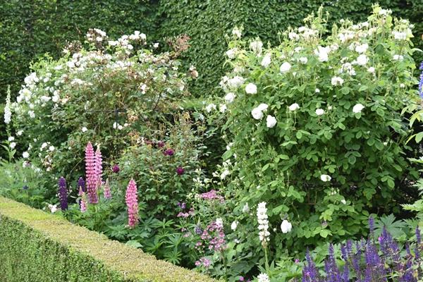 m_Rose Garden (6).jpg