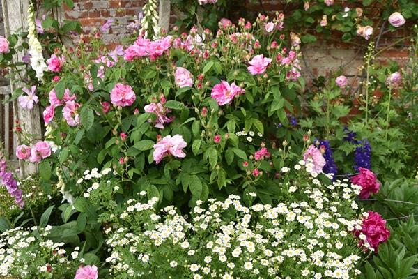 m_Rose Garden (29).jpg