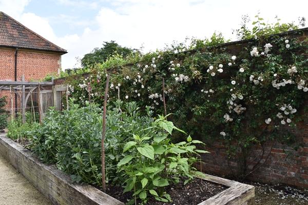 m_Veg Garden (1).jpg