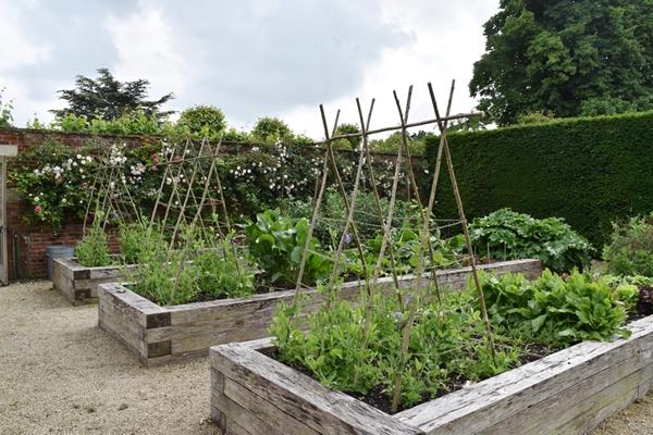 m_Veg Garden (6).jpg