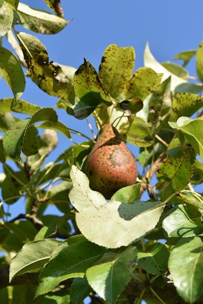 m_Garden - orchard (4).jpg