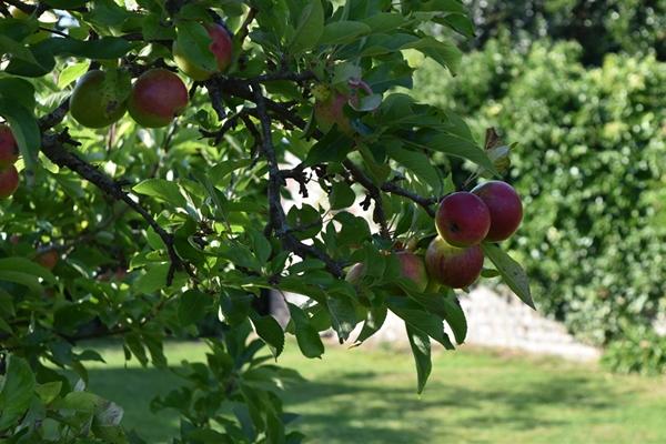 m_Garden - orchard (2).jpg