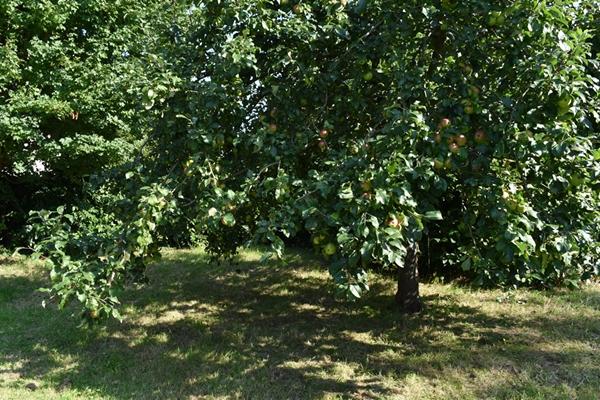 m_Garden - orchard (11).jpg