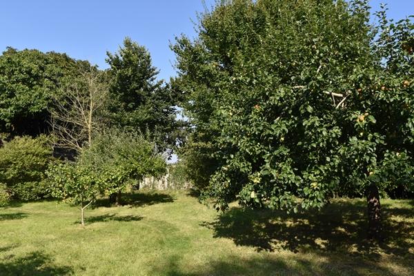 m_Garden - orchard (12).jpg