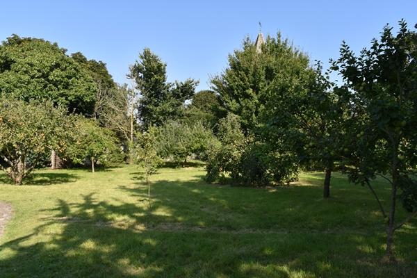 m_Garden - orchard (13).jpg
