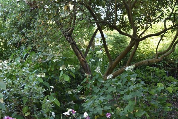 m_Garden (10).jpg