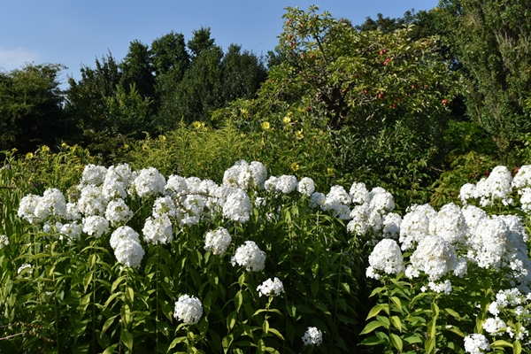 m_Garden (13).jpg