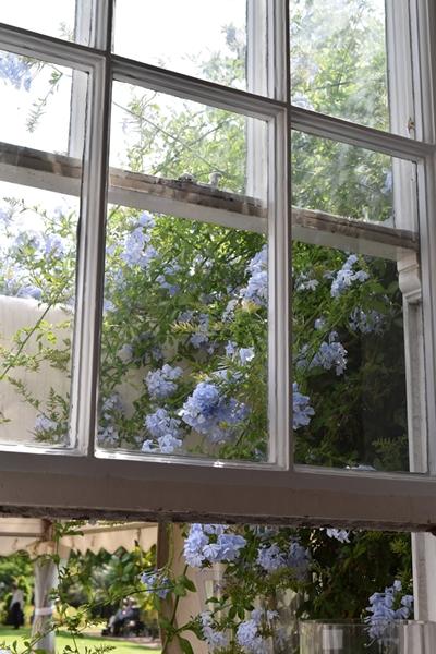 m_Blue (5).jpg