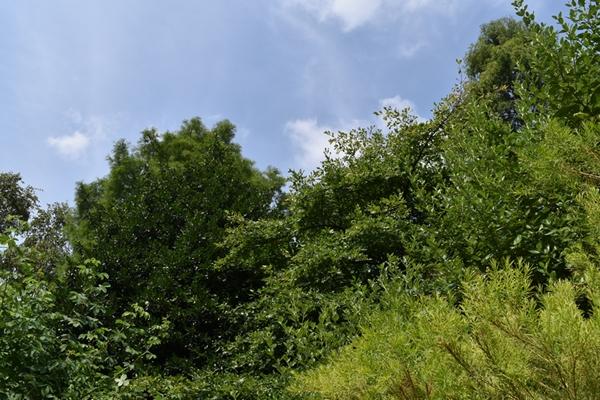 m_Trees (2).jpg