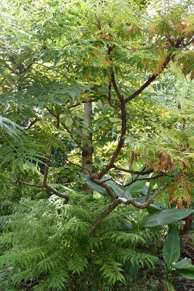 m_Trees (4).jpg