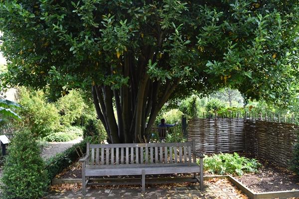 m_Trees (8).jpg