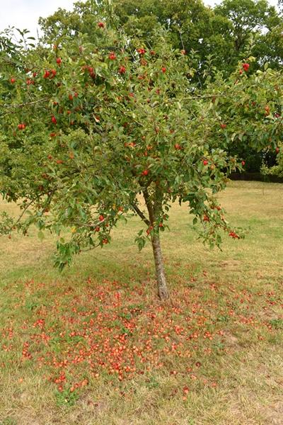 m_Orchard (6).jpg