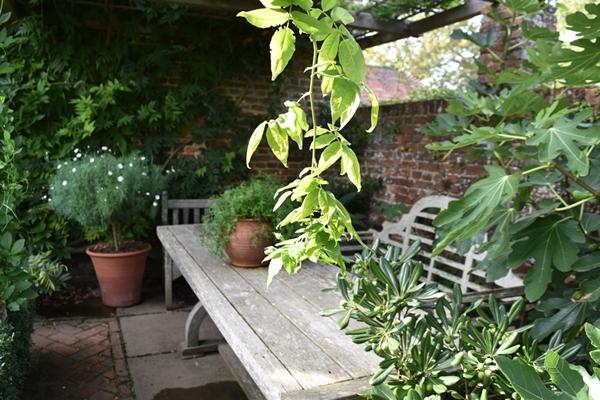 m_White garden (1).jpg