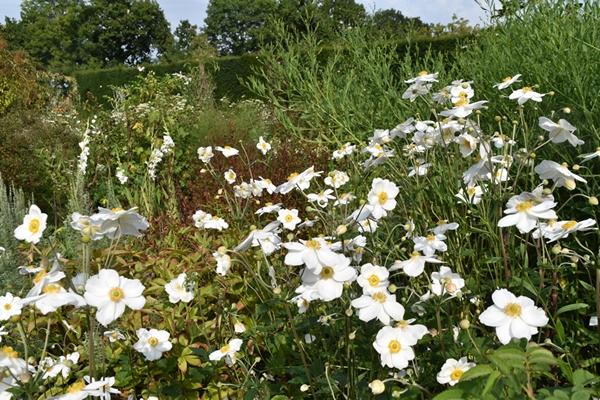 m_White garden (2).jpg