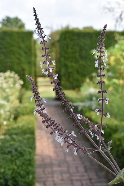 m_White garden (3).jpg