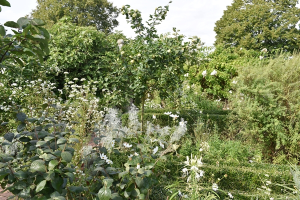 m_White garden (6).jpg