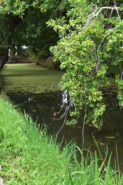 Water (3).jpg