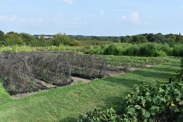 m_Veg garden (5).jpg