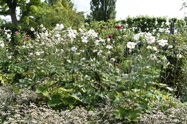 m_Garden (16).jpg