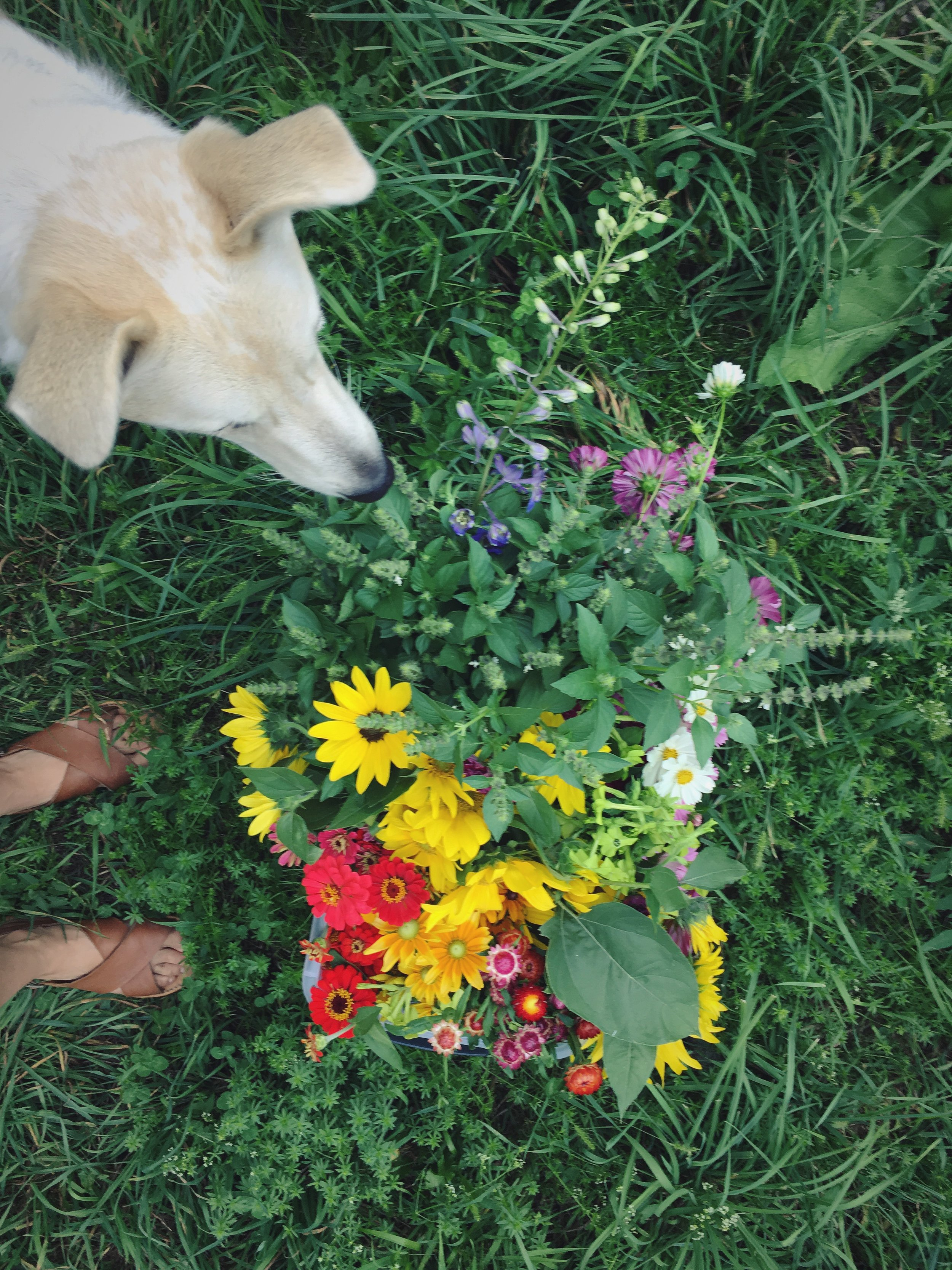Journal Flower Scout