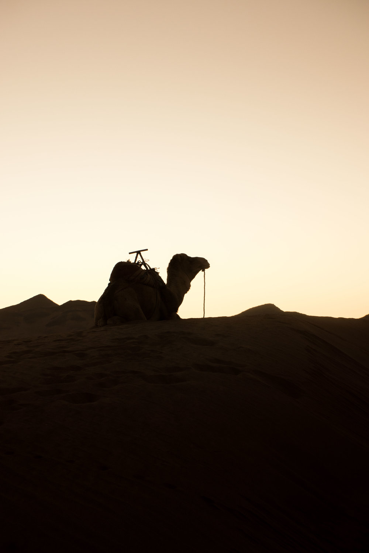 Morocco©Andreas Poupoutsis-71-min.jpg