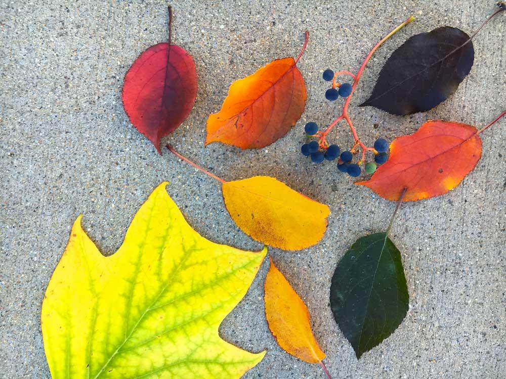 Colors, colors, colors galore!