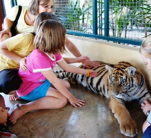 Tigerweb