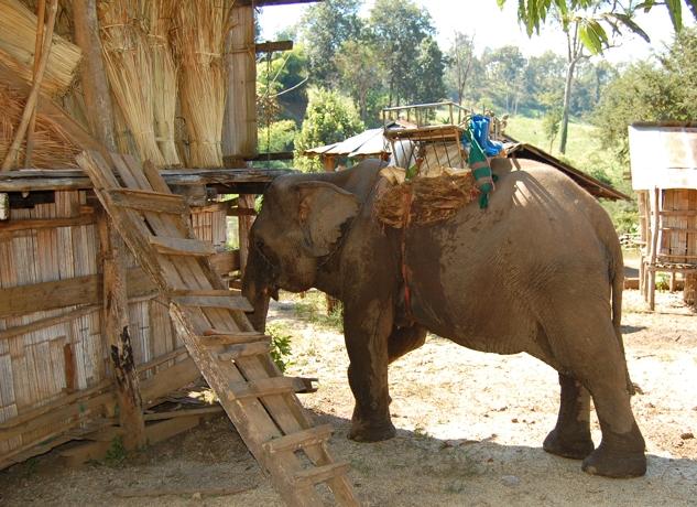 Bakcstageelephant