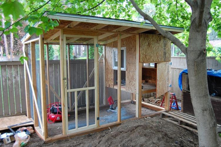 Chicken coop 3 web