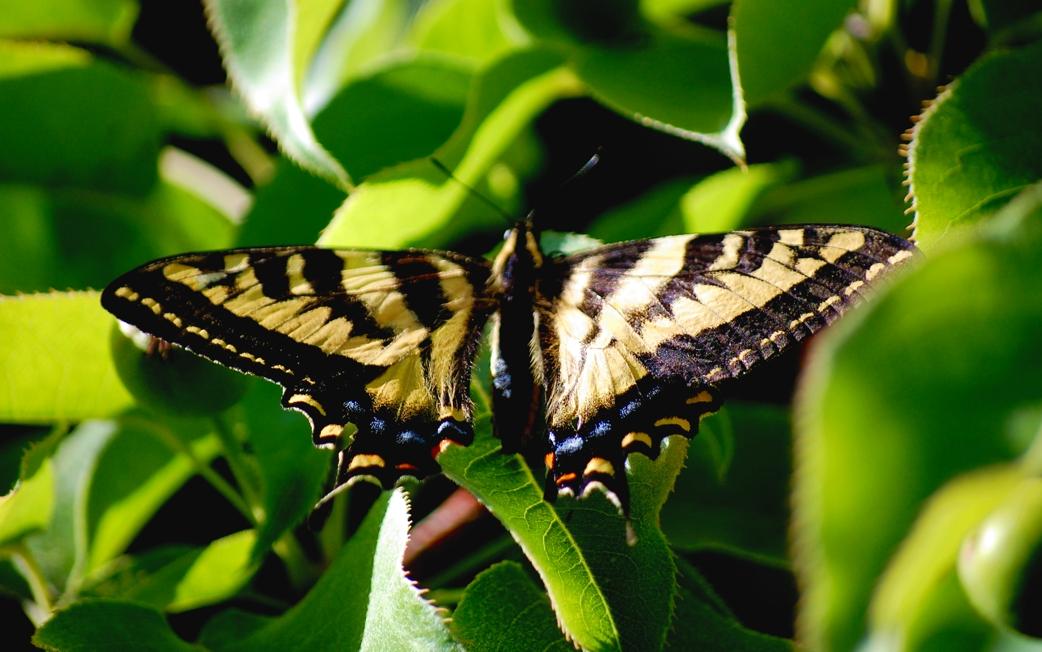 Monarchweb