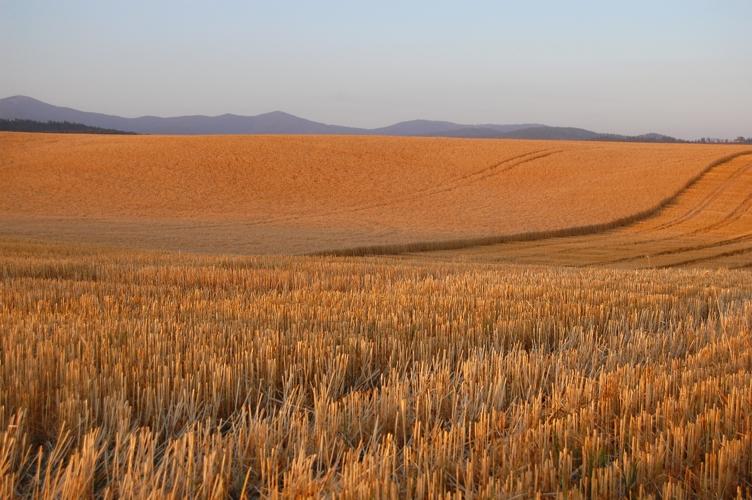 Wheat2web