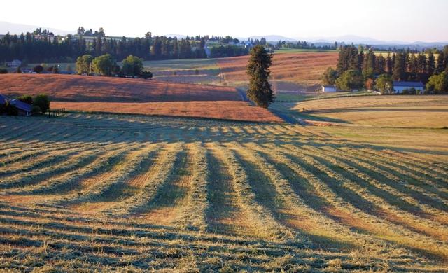 Farmrowsweb