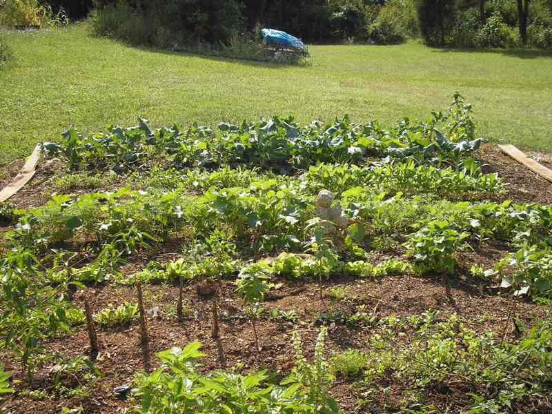 Larry veggie garden