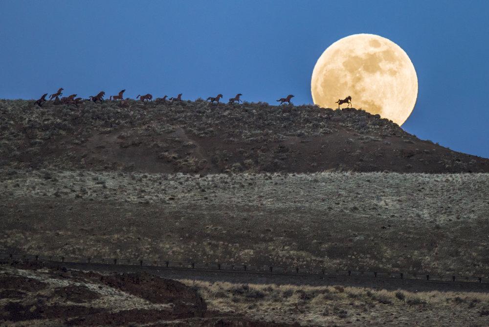wild horses-1-7.jpg