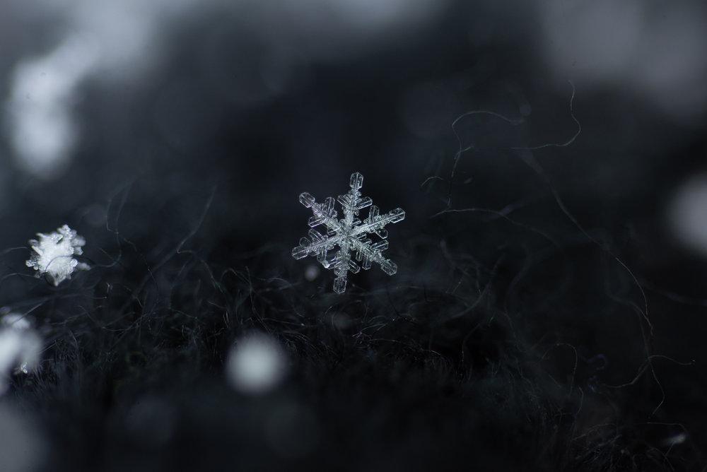 snowflake photography sample.jpg