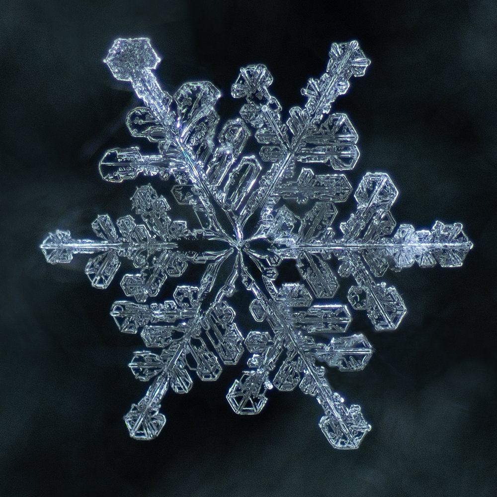 snowflake photography sample 1-4.jpg
