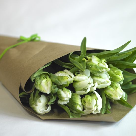Green and White Parrot Tulips Photo by  Melissa Mercier